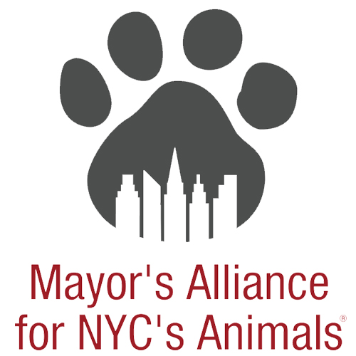 Mayors_Alliance